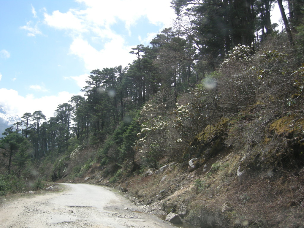 Valley Of Flowers, Sikkim