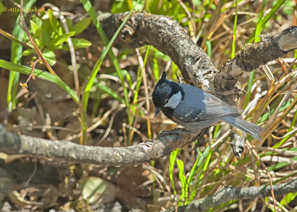 Binsar bird watching